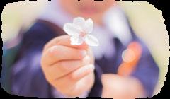 桜の花を差し出す子ども